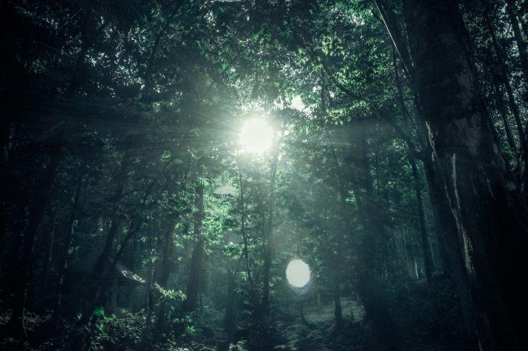 Suchagent: Im Crowdinvesting- & Crowdfunding-Dschungel den Überblick behalten